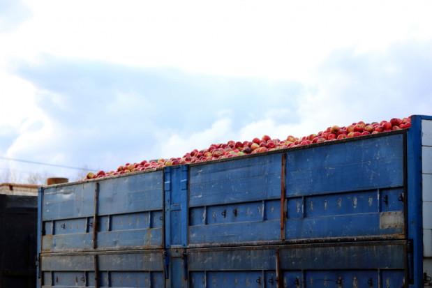 Oszustwo na skupie owoców. Firma skupująca nie płaciła za towar