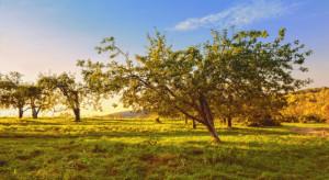 Pogoda: Do końca miesiąca ciepła i słoneczna aura