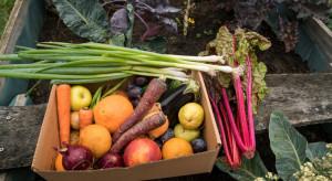 Szerzy się plaga kradzieży warzyw z pola
