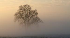 IMGW ostrzega przed mgłami