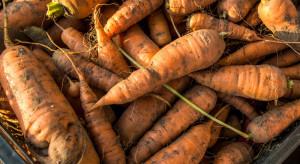 Białoruś: Kończą się zbiory owoców i warzyw