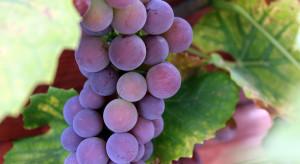 30.10 upływa termin składania w KOWR deklaracji dotyczących rynku wina