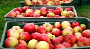 Tymbark interesuje się przetwarzaniem pozostałości z jabłek na biogaz