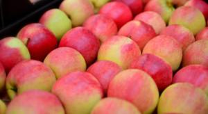Egipt zaczął importować jabłka wcześniej niż w ubiegłym roku