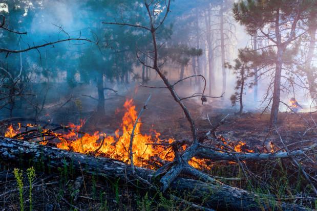 Zachodniopomorskie: 340 pożarów lasu w 2019 r.