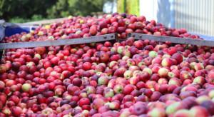 Agrounia apeluje o wstrzymanie dostaw jabłek przemysłowych wz. z obniżką cen