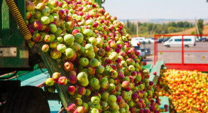 Mazowsze: Ceny jabłek przemysłowych jeszcze niższe