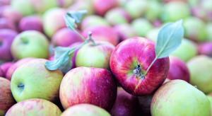 Resort rolnictwa: polskie jabłka mogą być sprzedawane w Kolumbii