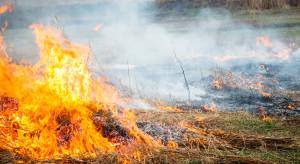 Śląsk: Spłonęło 5 hektarów łąk i nieużytków wokół stawów