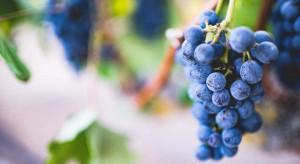 Wino Uniwersytetu Rolniczego w Krakowie docenione znakiem jakości