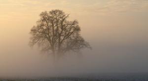 IMGW ostrzega przed gęstymi mgłami na wschodzie kraju