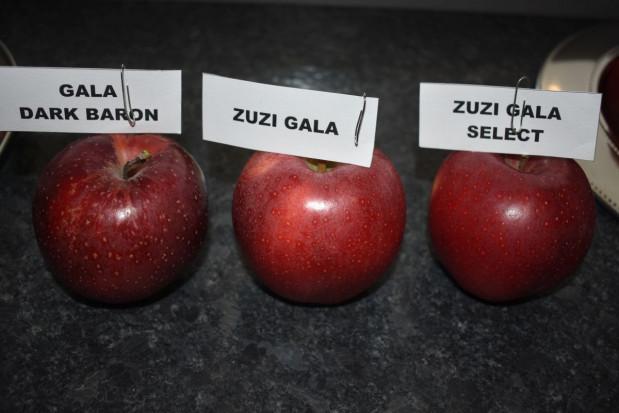 Którą Gale wybrać? Porównanie odmian Gala Dark Baron, Zuzi Gala Select, Zuzi Gala