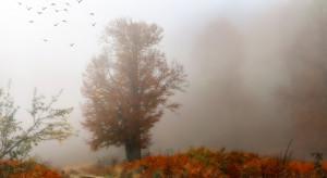 IMGW przewiduje ulewny deszcz i silny wiatr