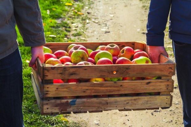 Umowy kontraktacyjne dzielą producentów i przetwórców owoców