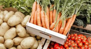 Analiza: Dynamika cen skupu warzyw gruntowych jest relatywnie niska