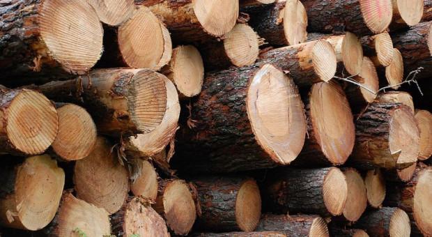 Lasy Państwowe: nowe zasady sprzedaży drewna będą obowiązywać przez dwa lata