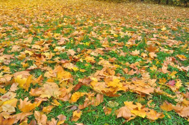 Pozostawianie opadłych liści oznacza wiele korzyści przyrodniczych