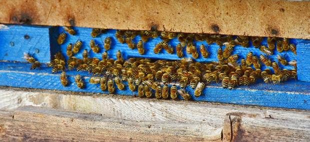 269 polskich gmin angażuje się w działania na rzecz owadów zapylających