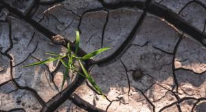 KO chce powołania stałej sejmowej Komisji ds. Klimatu