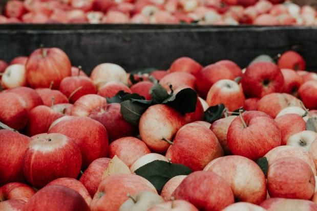 Niższe zbiory jabłek przełożyły się na wyższe ceny skupu. Owoce mogą być jeszcze droższe (wideo)