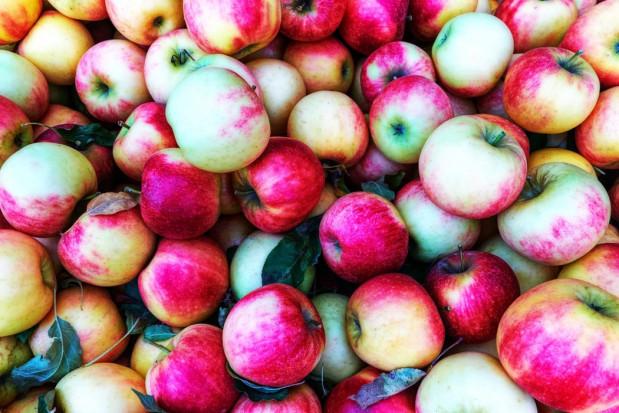 Rynek jabłek: Wszystkie odmiany droższe niż przed rokiem
