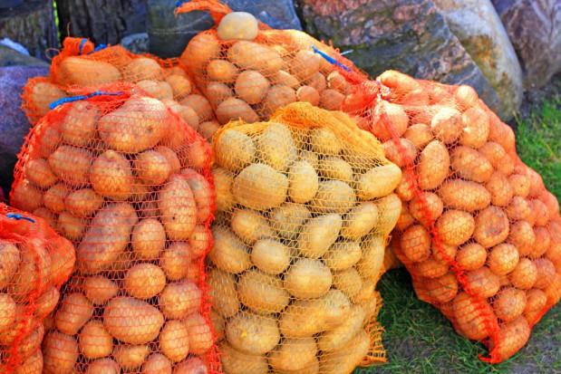 Rynek ziemniaków: Niższe zbiory i rekordowo wysokie ceny