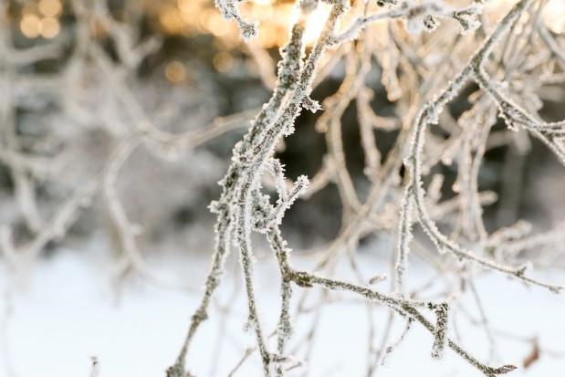 Pogoda: Na początku grudnia do całej Polski napłynie arktyczne zimno