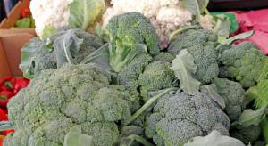 Rośnie powierzchnia upraw i spożycie brokuła w Polsce