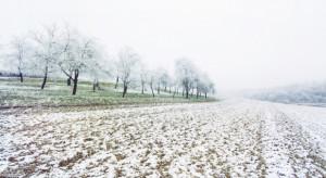 Pogoda: Nadchodzi zimowa aura. W weekend zrobi się biało