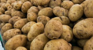 Czym wykopać ziemniaki? Przegląd kombajnów