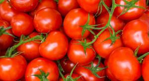 Opracowano koszulkę z pomidorów, która wytwarza energię