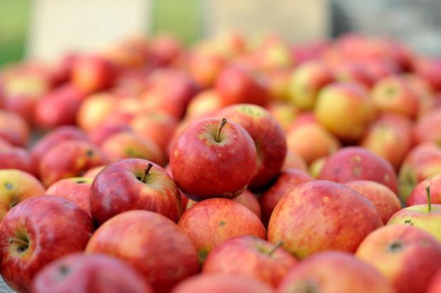 Mazowsze: Niewielki wzrost cen jabłek przemysłowych