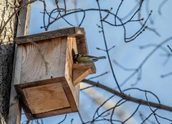 Podkarpackie: Leśnicy wieszają i konserwują budki dla ptaków