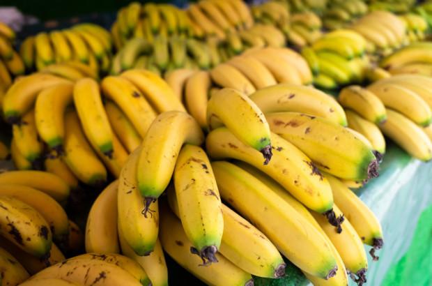 Rozprzestrzenienie się Fusarium zmieni światowy handel bananami