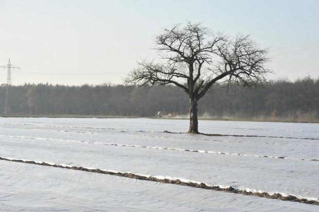 Plantatorzy truskawek zakończyli przygotowania upraw do zimy (video)