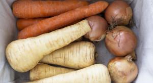 Rośnie podaż warzyw korzeniowych. Ceny spadają