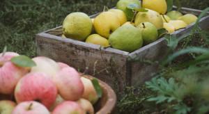 Raport: Produkujemy więcej owoców ekologicznych, mniej -warzyw i ziemniaków