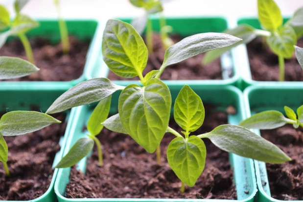 Rada Ministrów przyjęła projekt ustawy o ochronie roślin przed agrofagami