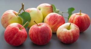 Dwa jabłka dziennie obniżają poziom cholesterolu