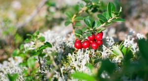 19 grudnia - Dzień wiecznie zielonych roślin
