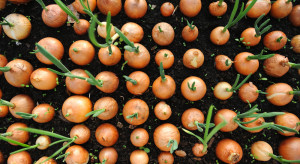 Łączną produkcję warzyw gruntowych GUS szacuje na ponad 3,8 mln ton