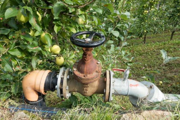 Nawadnianie sadów i jagodników – mikrozraszanie