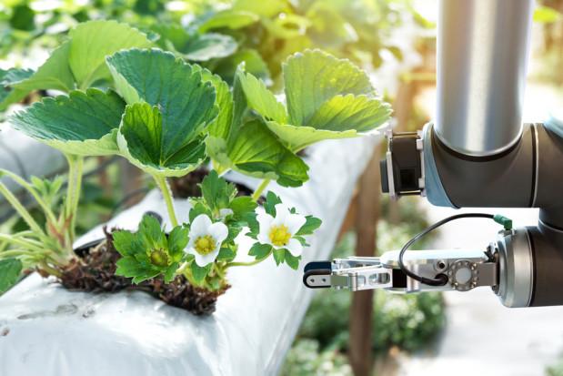 Rolnictwo przyszłości będzie wykorzystywać roboty i czujniki temperatury (wideo)
