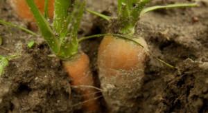 Sygnalizacją agrofagów zajmie się Instytut Ochrony Roślin i ODR-y (wideo)