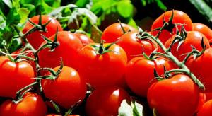 Kalisz: Azerbejdżanin podejrzany o oszukanie plantatorów pomidorów na 293 tys. zł