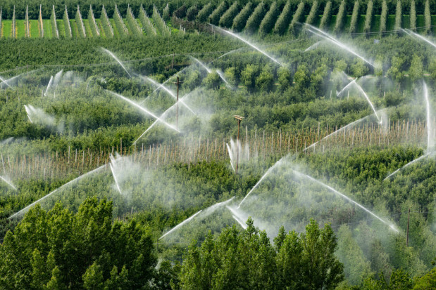 Nawadnianie sadów i jagodników – zraszanie nadkoronowe