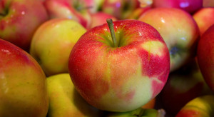 10.01 upływa termin rejestracji podmiotów zainteresowanych eksportem jabłek do Kolumbii