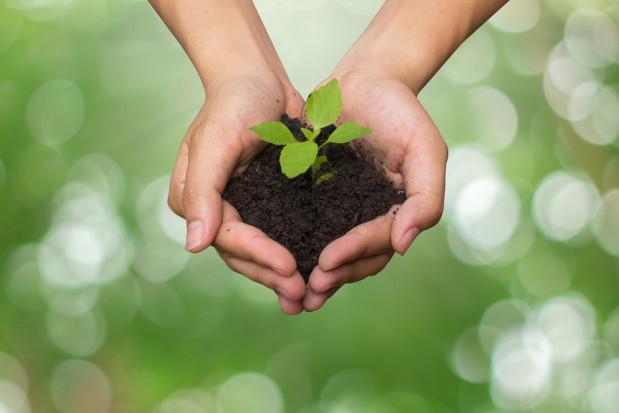 ONZ: 2020 rok Międzynarodowym Rokiem Zdrowia Roślin