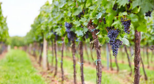 Kolejne winnice na Małopolskim Szlaku Winnym