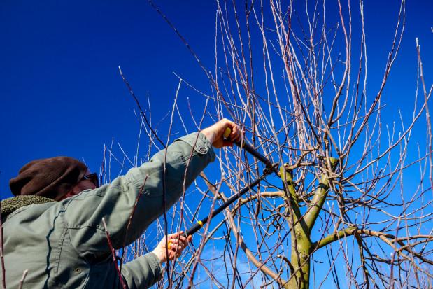 Cięcie sadów – przydatne narzędzia ręczne